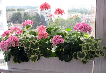 Как ухаживать за комнатные цветы