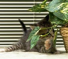 Обилие комнатных растений