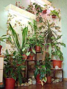 Цветочный уголок в квартире своими руками фото
